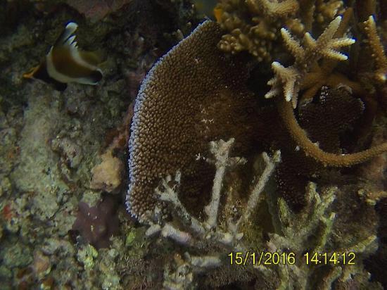 Tavewa Island, Fiji: FHD0413_large.jpg