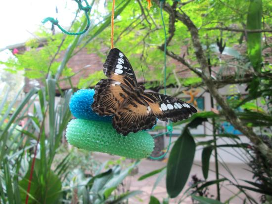 Can-olin Butterfly Sanctuary