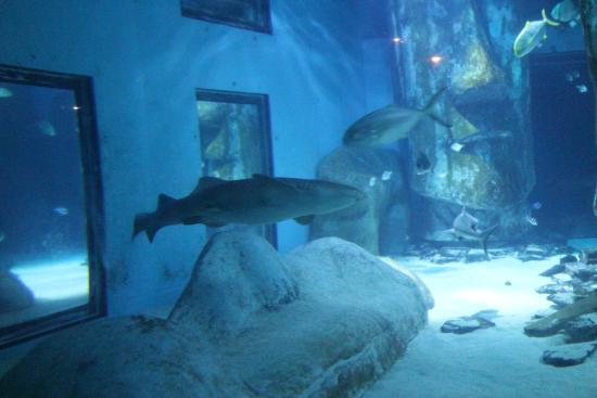 Sea Life Picture Of Sea Life London Aquarium London