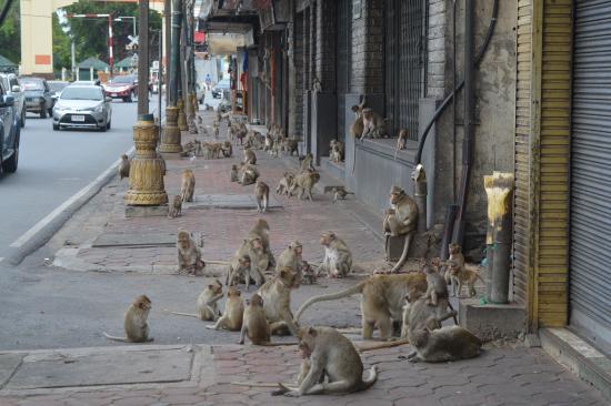 Picture of Phra Prang Sam Yot, Lop Buri - TripAdvisor