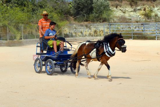 Victor's Horse & Carriage: Carriage Driving