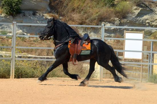 Victor's Horse & Carriage: On training