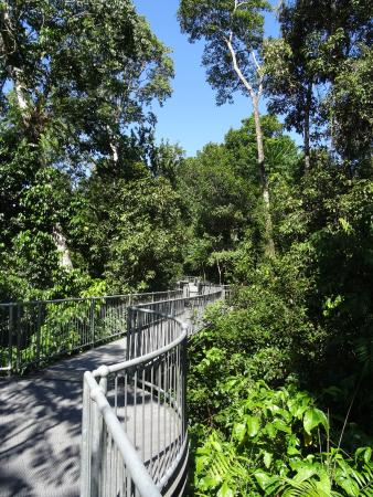 Mamu Tropical Skywalk Walk & Walk - Picture of Mamu Tropical Skywalk Innisfail - TripAdvisor