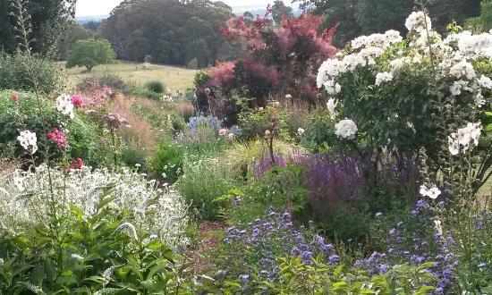 Hillandale Garden & Nursery