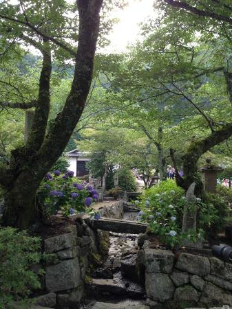 Yatadera Temple: 矢田寺