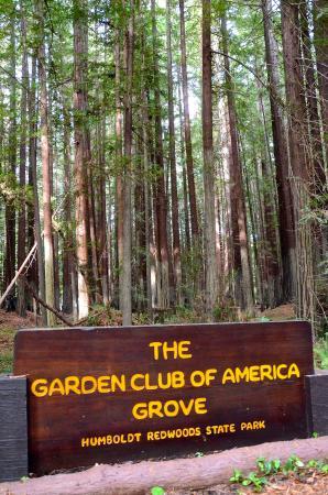Garden Club Grove Avenue of the Giants