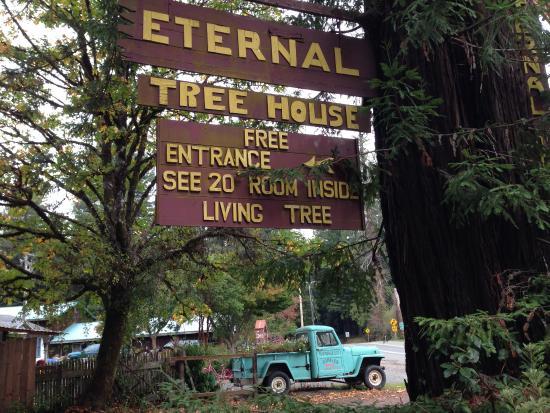 Eternal Tree House Cafe: Eternal Tree House