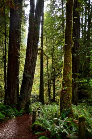 Orick, Califórnia: Prairied Creek Redwoods State Park