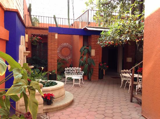 Mi casa del arbol reviews photos oaxaca mexico hostel tripadvisor - Hotel casa arbol espana ...