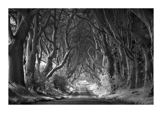 Rohan reilly photography tha dark hedges in antrim