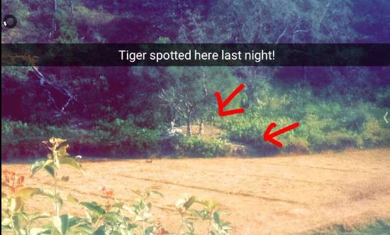 The Ranger's Lodge, Imran's Jungle Home in Corbett Photo