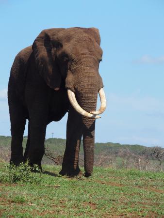 Jozini, Sudáfrica: Daar komt Rambo...