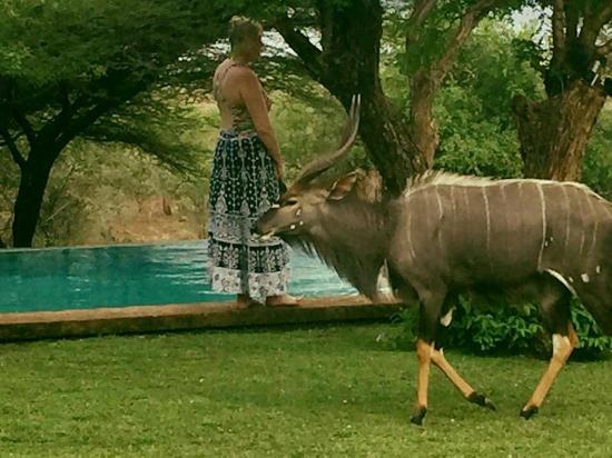 Pongola, Sør-Afrika: FB_IMG_1452571651300_large.jpg