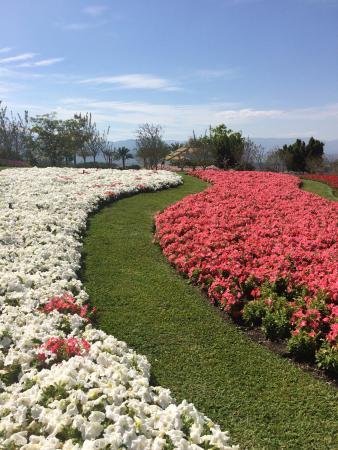 Preciosas las flores Picture of Jardines de Mexico Jojutla