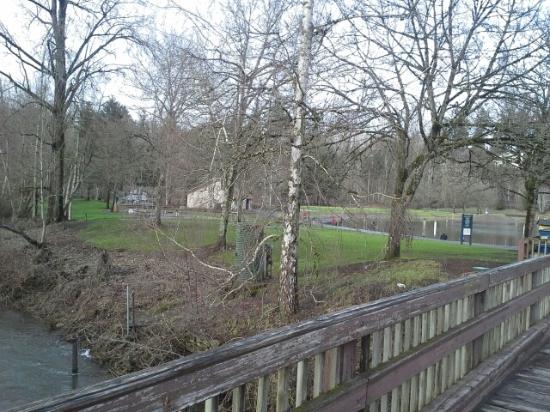Salmon Creek Park: Scene from bridge