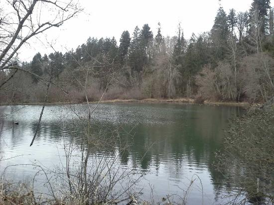 Salmon Creek Park: Back pond area