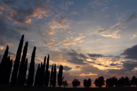 Гаворрано, Италия: Cipressi e ulivi