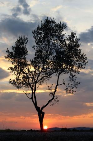 Гаворрано, Италия: Ulivo al tramonto