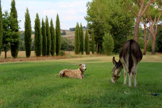 Гаворрано, Италия: Ciuchino