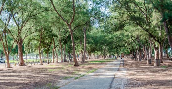 Longboat Key, FL: A fantastic shaded path parallels the beach! Great for a cool morning walk!