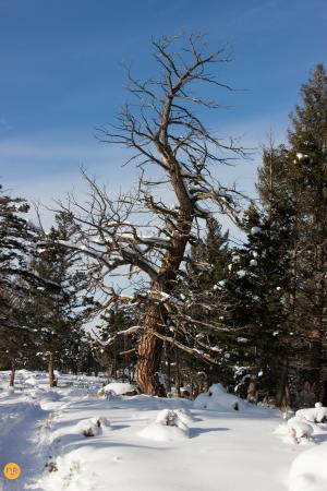 Yellowstone Association - Private Tours: Scenery along our snowshoe hike