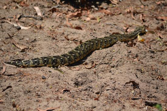 snake - Picture of Kragga Kamma Game Park, Port Elizabeth