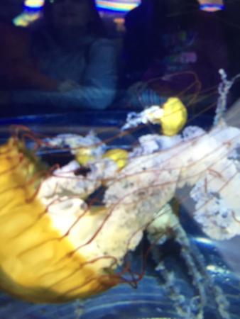 写真Adventure Aquarium枚