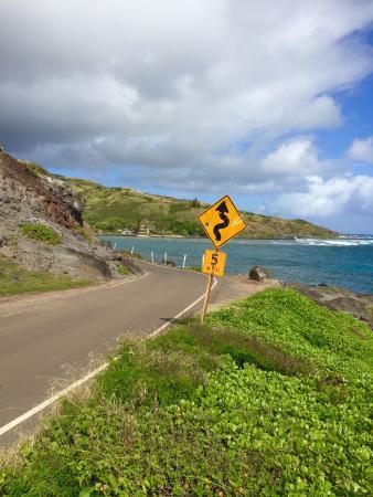 Maunaloa, Hawái: photo5.jpg
