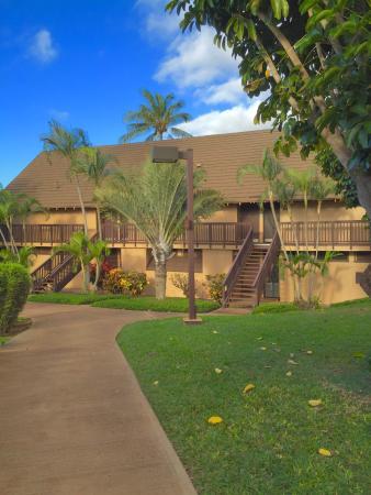 Maunaloa, Hawái: photo8.jpg
