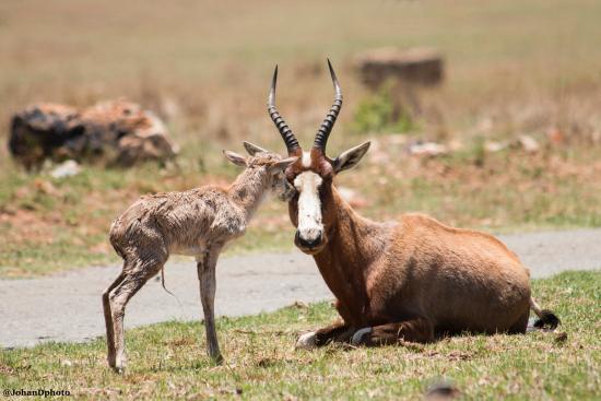 Krugersdorp, Sydafrika: 4