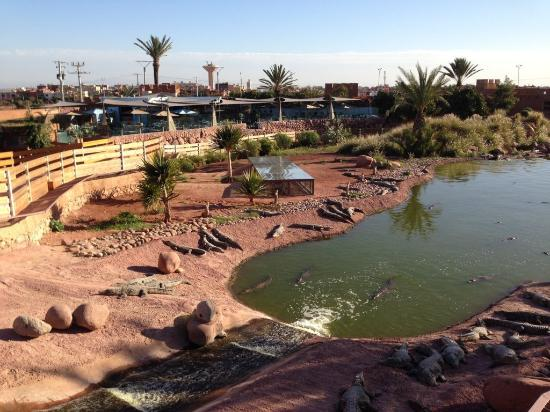 Crocodile Park Activity