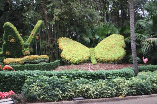 Butterfly foliage at Busch Gardens - Picture of Busch Gardens, Tampa ...