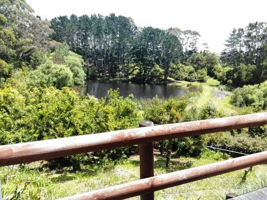 Helensville, New Zealand: IMG_20151214_122916_large.jpg