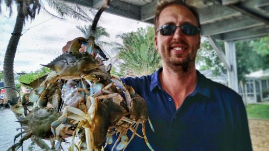 Dolphin Inn: Blue crabs from the Gulf