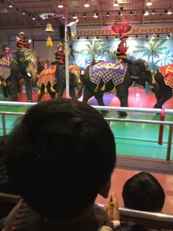 Elephant Land : photo1.jpg
