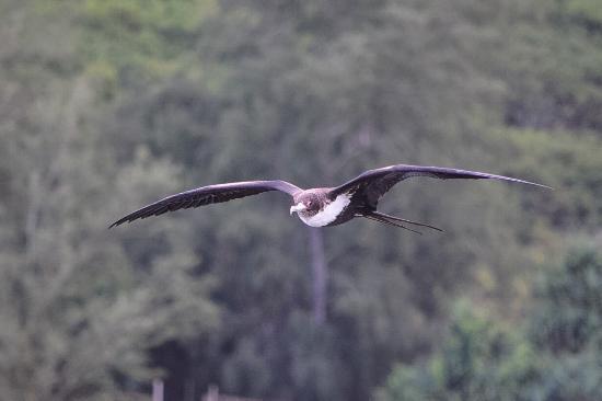 基拉韋厄照片
