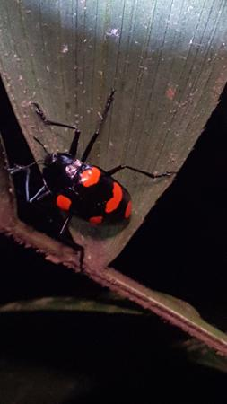 Forest Alive: Beetle