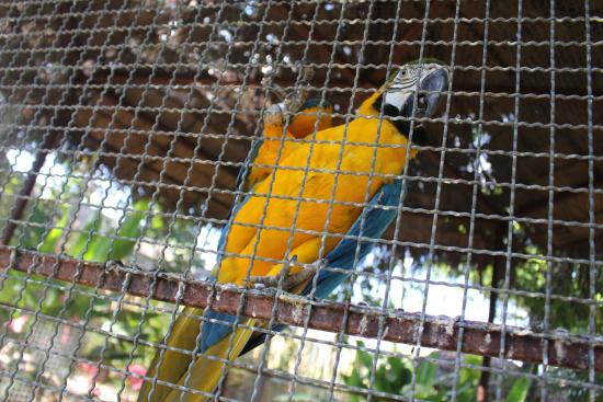 Image result for macaw in cage