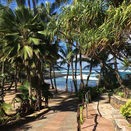 Paia, HI: Beautiful surroundings at Mama's