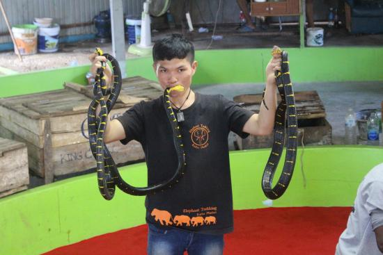 Holding the snakes - Picture of Phuket Cobra Show and Snake Farm, Rawai - Tri...