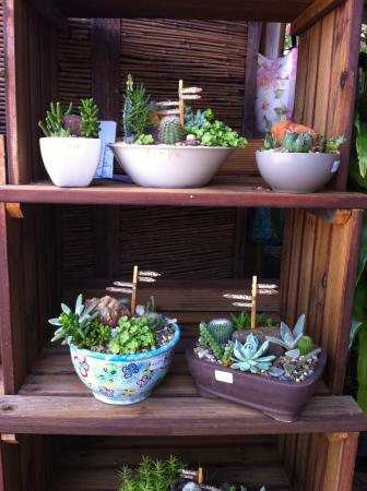 Ravenshoe, Australie : Kims Creative  Ancient Gardens.  Cactus and Succulents