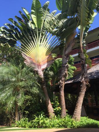 Kata Sea Breeze Resort: photo1.jpg