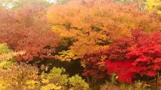 Arcen, Holandia: Laatste bezoek voor de seizoenssluiting. Prachtige kleuren!
