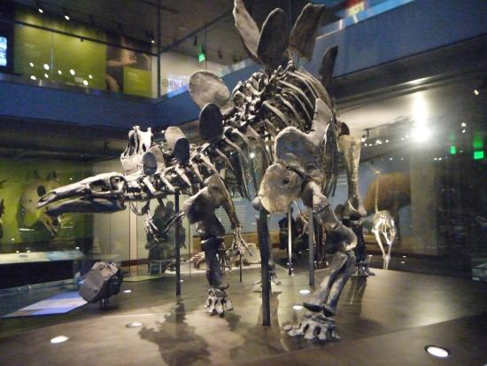 dinosaurs picture of natural history museum of los angeles county rh tripadvisor co za