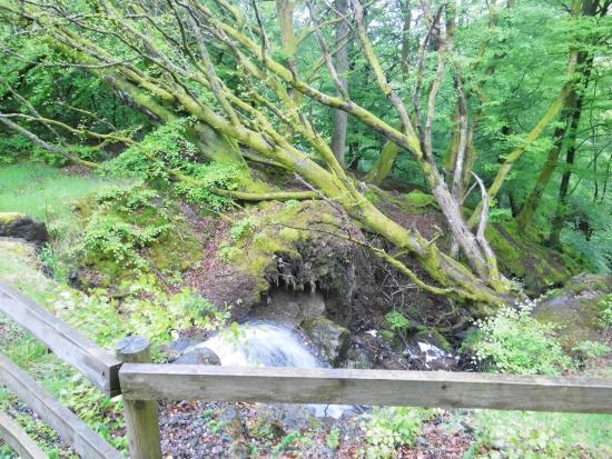 Bracklinn Falls Bridge and Callander Crags : Nature is calling..at Bracklinn Falls
