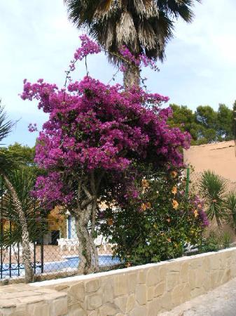 Cala Vadella, Spanje: ... vor dem Pool