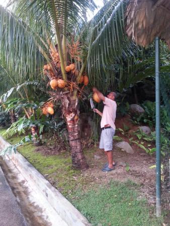 Port Glaud, Seychellene: Merci Antoine pour le goûter!