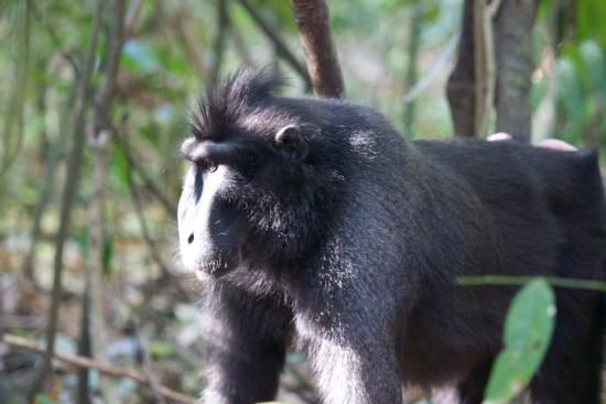 Tangkoko Wildlife Tour - Day Tours