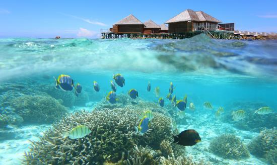 perfect house reef - Picture of Vakarufalhi Island Resort, Vakarufalhi Island - TripAdvisor