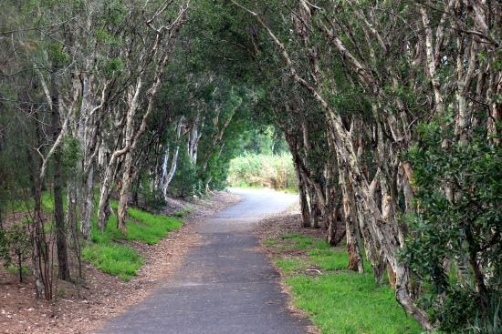Bicentennial Park Arc With Trees